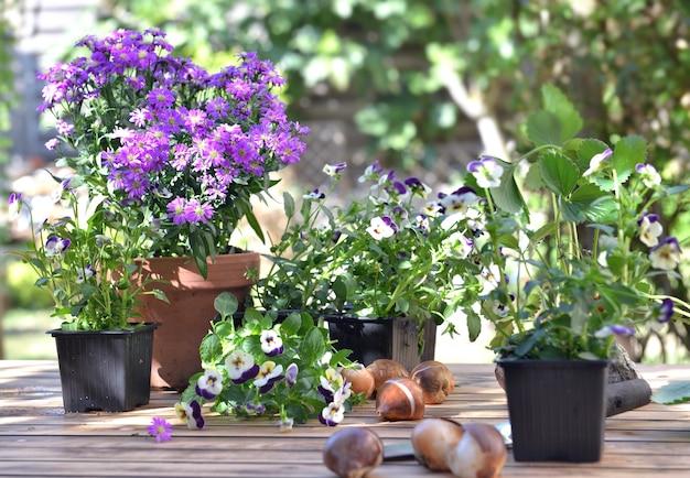Fleurs et bulbes à planter mis sur une table en bois dans le jardin