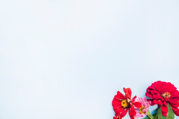 Fleurs de calendula sur fond bleu clair