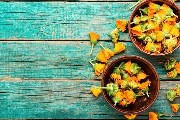 Fleurs de calendula fraîches en phytothérapie.souci,herbes médicinales.copy space