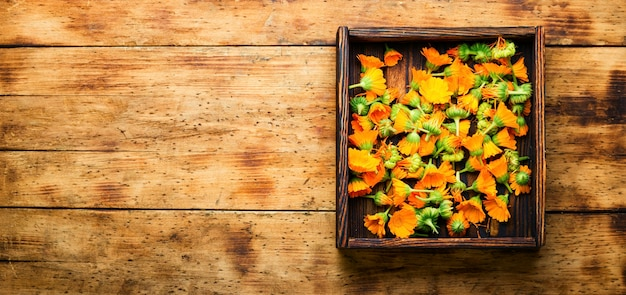 Fleurs de calendula fraîches en phytothérapie.souci,herbes médicinales sur fond de bois rustique