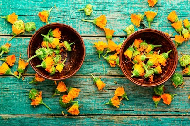 Fleurs de calendula fraîches en phytothérapie.souci,herbes médicinales