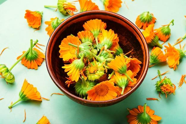 Fleurs de calendula en phytothérapie.souci,herbes médicinales.médecine d'herbes naturelles