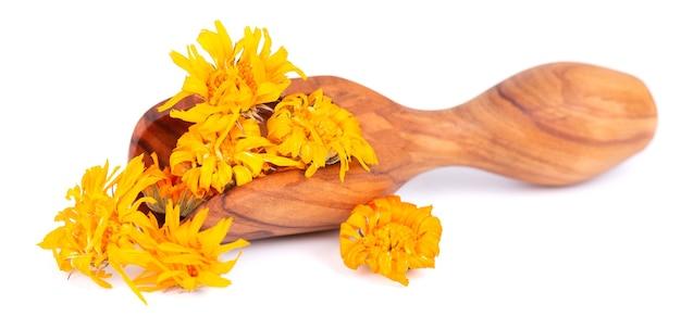 Fleurs de calendula séchées dans une cuillère en bois, isolées sur fond blanc. pétales de calendula officinalis. herbes medicinales.
