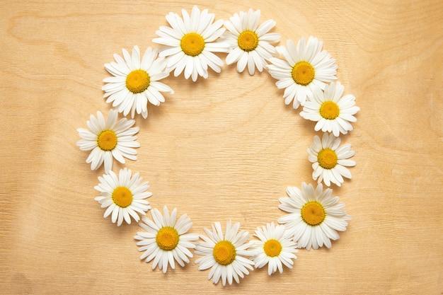Fleurs de camomille en fleurs