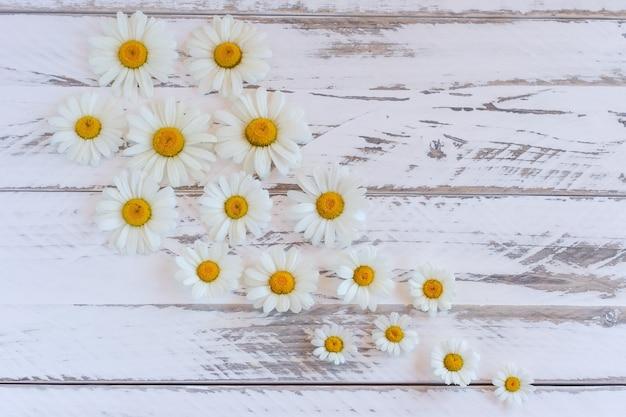 Fleurs de camomille marguerite sur fond de table en bois avec espace de copie.