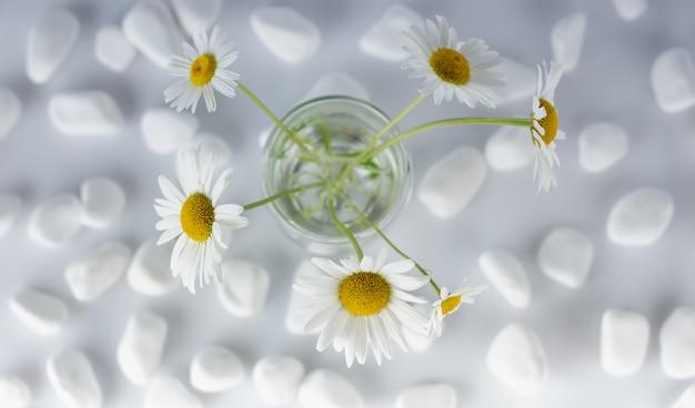 Les fleurs de camomille sont recouvertes de pierres blanches pour le spa, le concept de relaxation ou le thé à la camomille.
