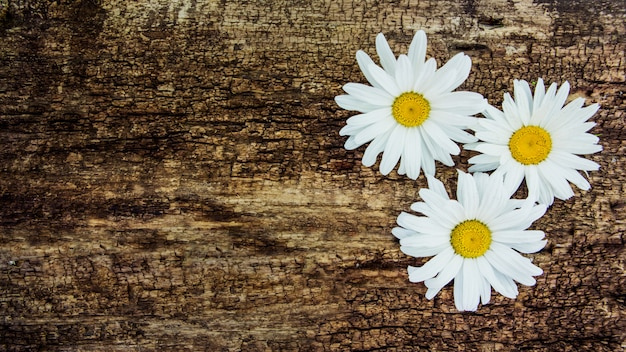 Fleurs de camomille sur la table d'une table en bois. avec copie espace