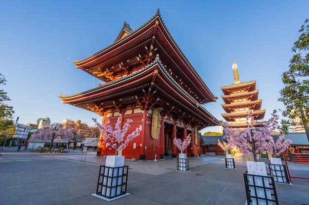 Fleurs de cerisier au temple sensoji, tokyo, japon