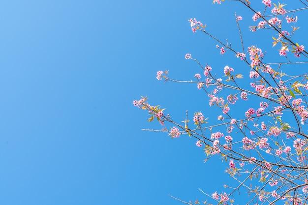 Fleurs de cerisier dans l'arbre