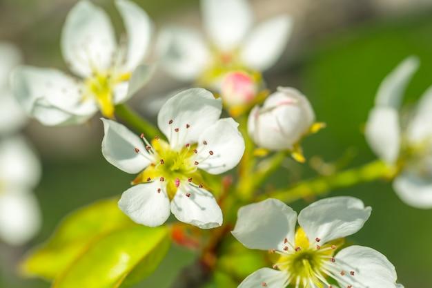 Fleurs de cerisier sur fond de nature floue
