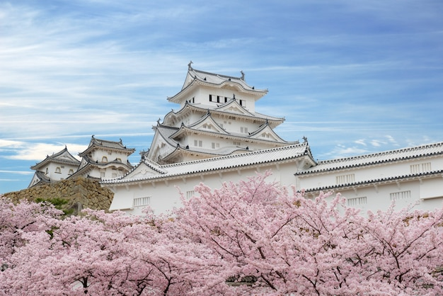 Fleurs de cerisiers en fleurs et château de himeji à himeji, hyogo, japon