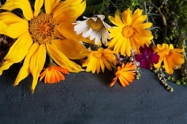 Fleurs de champ d'été jaune sur fond sombre. plantes médicinales