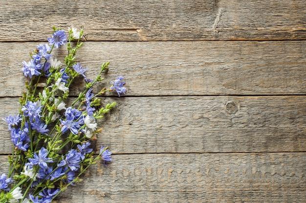 Fleurs de chicorée sur fond en bois rustique. plante médicinale cichorii. espace de copie