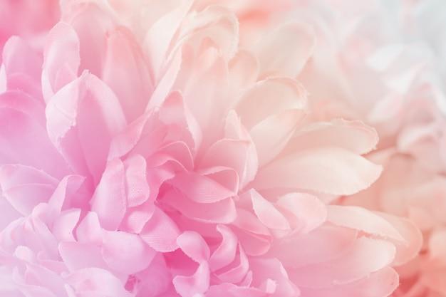 Fleurs de chrysanthème de couleur pastel douce et style flou pour le fond
