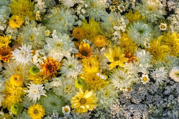 Fleurs de chrysanthèmes jaunes et blanches