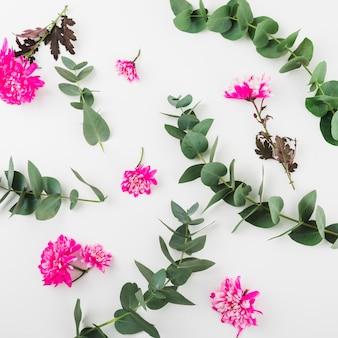 Fleurs de chrysanthèmes roses et brindilles sur fond blanc