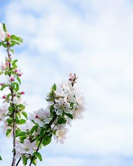 Fleurs sur ciel bleu