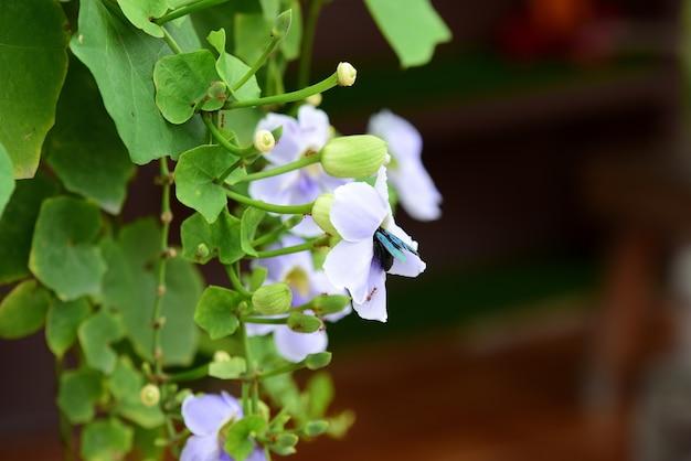 Fleurs colorées dans le jardin. belles fleurs dans le jardin. floraison en été.