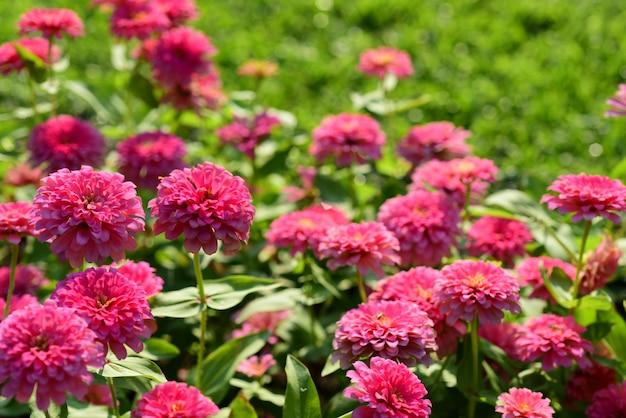 Fleurs colorées dans le jardin.