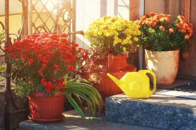 Fleurs colorées dans des pots sur le porche de la maison avec arrosoir.