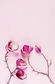 Fleurs colorées décoratives