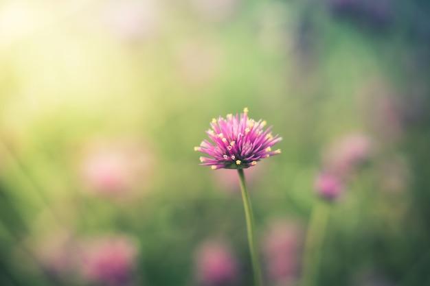 Fleurs colorées sur fond flou
