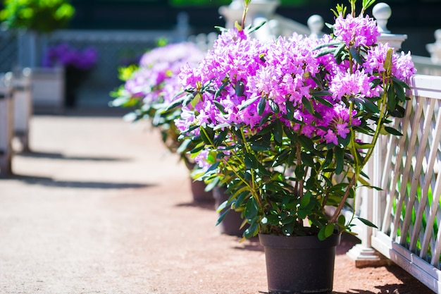 Fleurs colorées fraîches dans le jardin de printemps