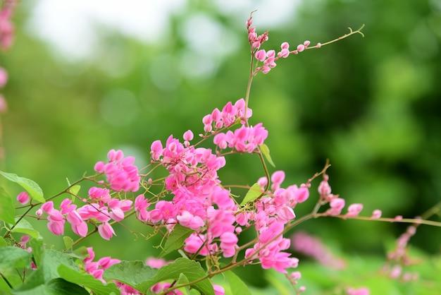 Fleurs colorées avec lumière abstraite et bokeh pour le fond.