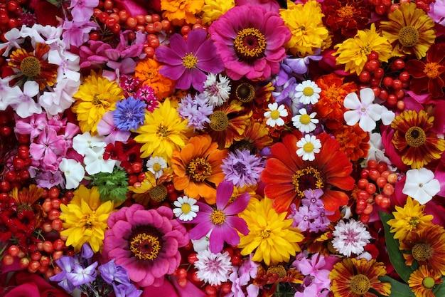 Fleurs colorées, vue de dessus.