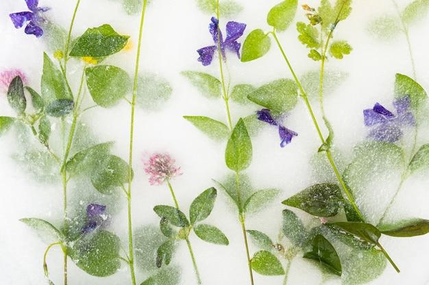 Fleurs congelées dans la glace, fleurs bleues, fond décoratif.