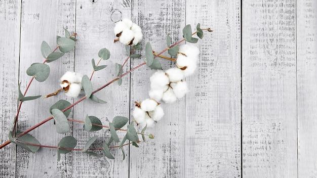 Fleurs de coton blanc et feuilles d'eucalyptus vert sur mur en bois gris vue de dessus