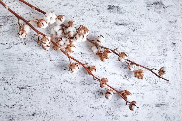 Fleurs de coton blanc sur une table en bois