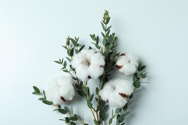 Fleurs de coton et branche avec feuilles sur blanc