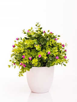 Fleurs de couleur en pot blanc isolé sur blanc