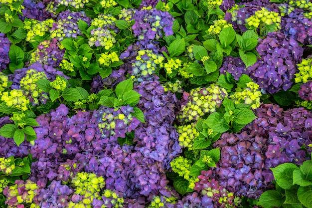 Fleurs dans le jardin.