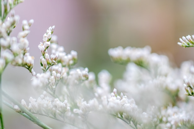 Fleurs dans la nature