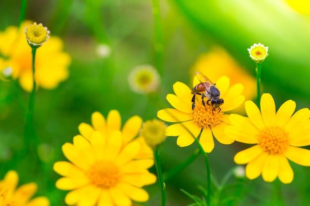 Fleurs dans la nature.