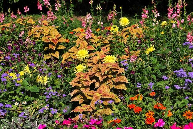Fleurs dans le parc à ludwigsburg, allemagne