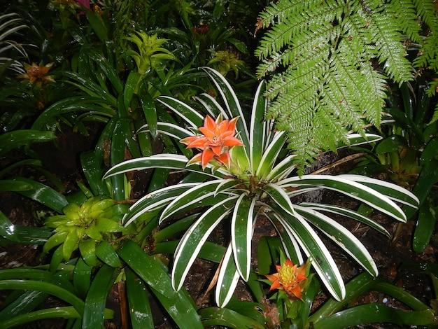 Fleurs dans le parc ornithologique à iguazu, brésil