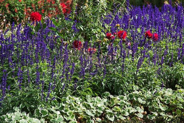Fleurs dans le parc de potsdam, allemagne