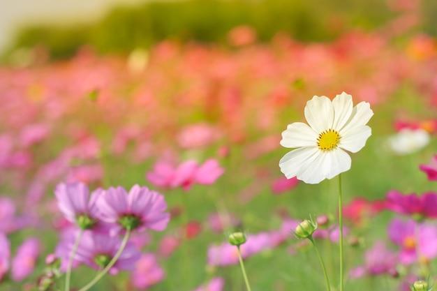 Fleurs dans la prairie