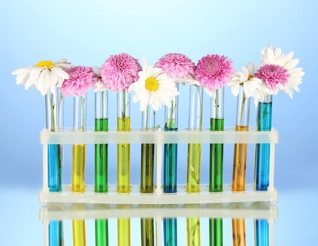 Fleurs dans des tubes à essai isolés sur bleu