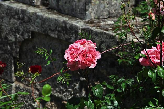 Fleurs dans le village de monsanto au portugal