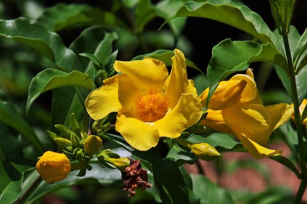 Fleurs dans la ville de stone town, zanzibar, tanzanie