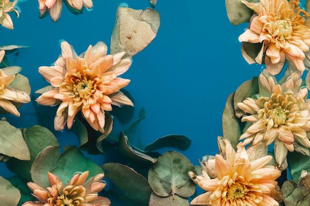 Fleurs délicates avec des feuilles dans l'eau