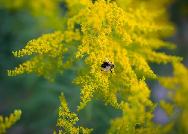 Fleurs douces et abeille floue