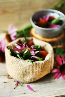 Fleurs d'échinacée. plante médicinale.