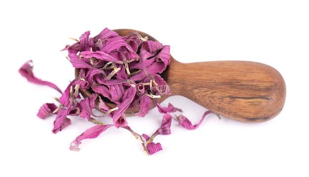 Fleurs d'échinacée séchées dans une cuillère en bois, isolées sur fond blanc. pétales d'echinacea purpurea. herbes medicinales.