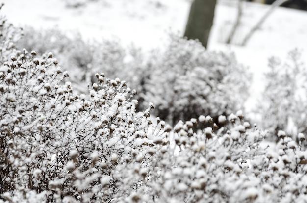 Fleurs enneigées