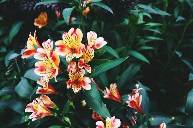 Fleurs épanouies et arbre dans la coupole de fleurs aux jardins de la baie, singapour